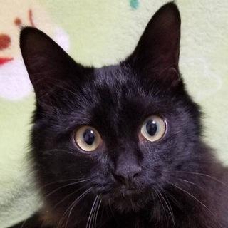 やんちゃな黒猫王子♥ナルディくん