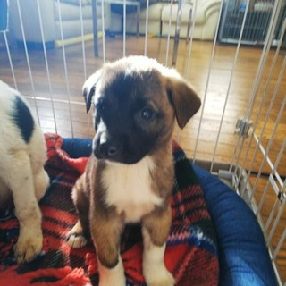 センター保護・子犬・オスメスあり・2~3ヶ月