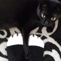 ネコ靴下、買ってみた!