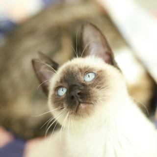 抱っこ大好き お膝大好きなストーカー猫さんです。
