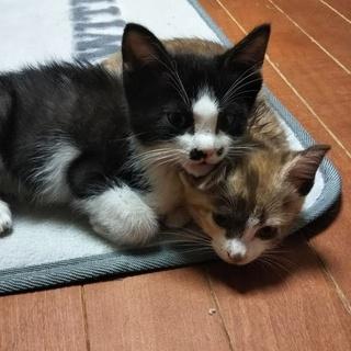 性格良くて仲良し兄弟子猫