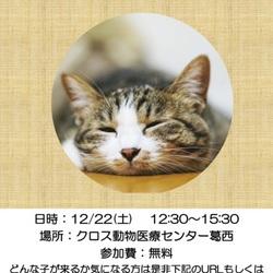 12/12(土)平井・小松川Shippoの会 里親会開催!!@江戸川区北葛西