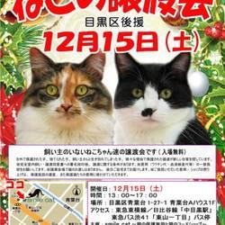 ★12月15日(土)「ねこの譲渡会」smile cat@中目黒(室内)