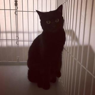 ☆黒猫ちゃん里親募集☆