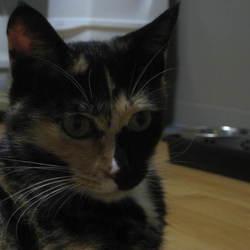 猫用ケージ増面(3段目)アメブロからの引越し6-1
