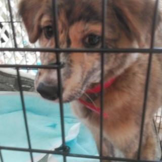 琉球犬ミックス、綺麗な子です。