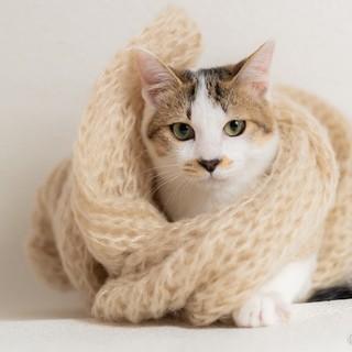元気で懐こい 三毛猫セレナちゃん♪