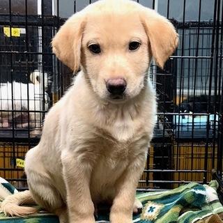 I★772 2カ月の可愛い子犬です。