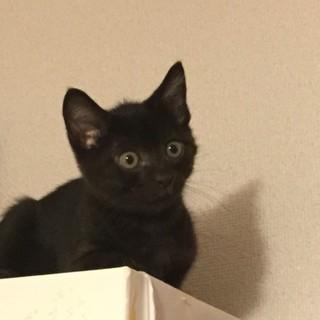 甘えん坊の黒猫ちゃん 動画あり