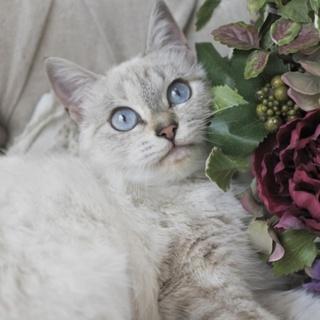 ブルーの瞳のアリスちゃん