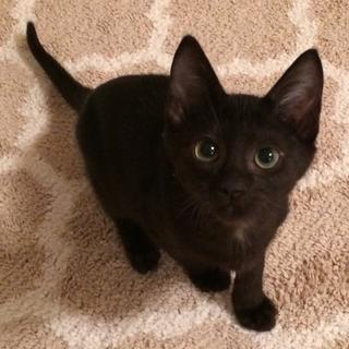元気はつらつ!わんぱく黒猫トリオ
