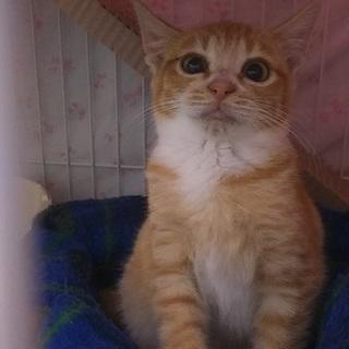 スーパービビり猫です猫の飼育経験ある方希望