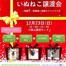 いぬねこ譲渡会~保護犬・保護猫に素敵なクリスマスを~