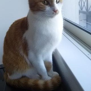 トラ猫兄妹の新しい家族になってください