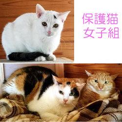 「子猫のぎうぎう里親会」 ~保護猫シェアハウス・育む~  サムネイル2