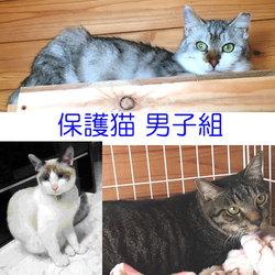 「子猫のぎうぎう里親会」 ~保護猫シェアハウス・育む~  サムネイル3