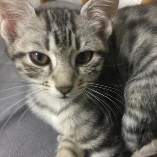 もう少しで3ヶ月の猫ちゃんです