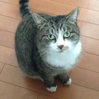 甘えん坊の成猫です。可愛がって下さい。