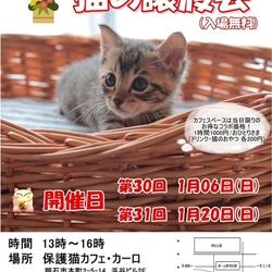 明石【猫の譲渡会】猫まみれwithカーロ