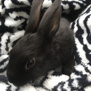 子ウサギ(2018.10.24生)