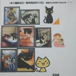 12/23(日)㊗️本八幡駅前  猫譲渡会