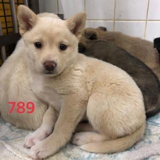 可愛い子犬ちゃんの家族募集中です。789番