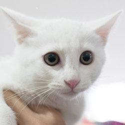1月5日(土)「猫の譲渡会」・愛知県みよし市