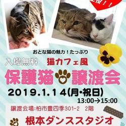 オトナが主役!!猫カフェ風保護猫譲渡会