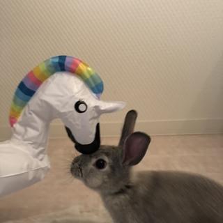 生後3ヶ月のミニウサギの男の子里親募集です!