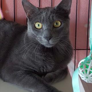 猫が大好きなグレーの子猫プッちゃん