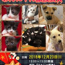 倉敷市玉島★保護犬猫譲渡会★