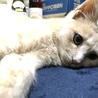 里親急募!生後6ヶ月の元気なオス子猫を保護中