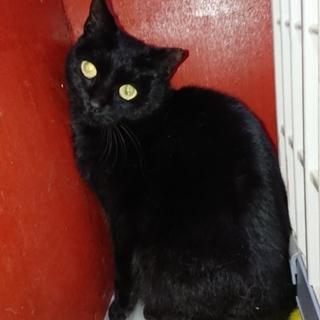 かわいい黒猫ちゃん