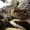 とても人懐っこい小さめキジトラ