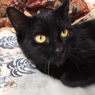 黒猫の女の子 6ヶ月位