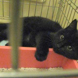 12月22日まで限定募集 黒猫の可愛い女の子