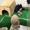 ハリネズミの子供(生後2ヶ月)