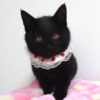 可愛い黒猫☆ももちゃん 3ヵ月