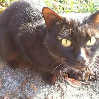 山奥で頑張って生きてた黒猫君 行き場がありません!