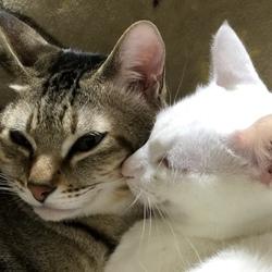 猫も笑う年の瀬です