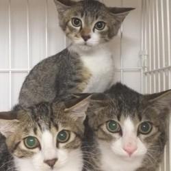 1月12日(土) 地域猫から社会猫へ FIPフリー 四谷猫廼舎 里親会(ボランティア募集中) サムネイル2