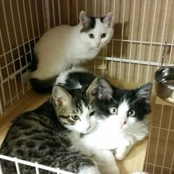 1月12日(土) 地域猫から社会猫へ FIPフリー 四谷猫廼舎 里親会(ボランティア募集中) サムネイル3