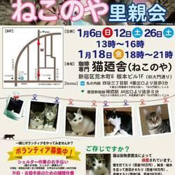 1月18日(金) 地域猫から社会猫へ FIPフリー 四谷猫廼舎ナイター里親会(ボランティア募集中)