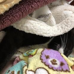 猫は丸くなって寝る?