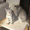 美猫姉妹 サムネイル2