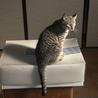 美猫姉妹 サムネイル4