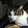 3/24(日)Cat行徳シェルター譲渡会❤️ねね サムネイル4