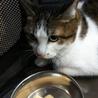 3/24(日)Cat行徳シェルター譲渡会❤️ねね サムネイル6