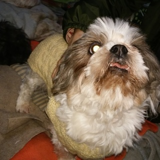 多頭飼育13匹の小型犬ミックスの里親募集