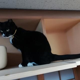 白ソックスがとってもキュートな黒猫女子です